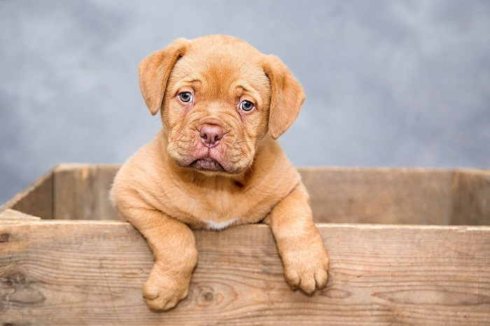 Kukana pre psa a jej význam